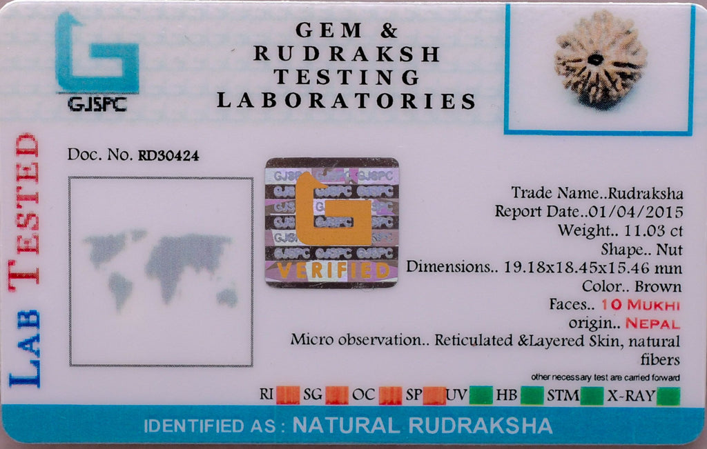 100% Real Quality Natural 10 Mukhi Rudraksha