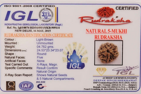 Image of Top Quality Certified 5 Mukhi Rudrakshas From Nepal
