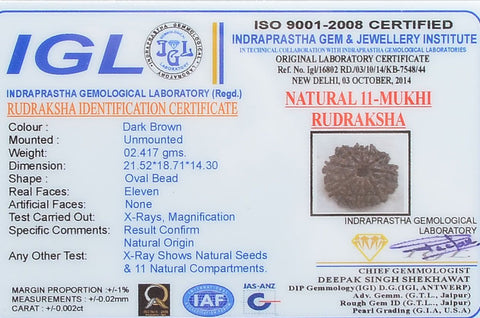 Image of 100% Certified Best Quality 11 Mukhi Rudraksha