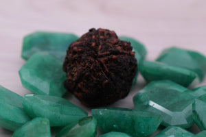 Natural Best  Quality Certified 5 Mukhi Rudrakshas From Nepal