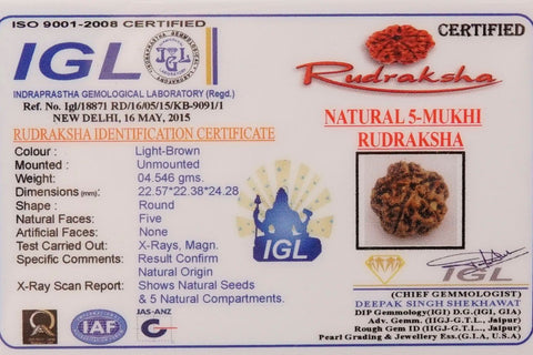 Loose Certified Best Quality From Nepal 5 Mukhi Rudrakshas