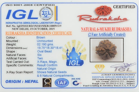100% Original 6 Mukhi Rudrakshas From Nepal