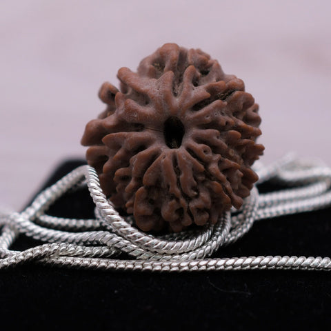 Image of 100% Real Quality Natural 10 Mukhi Rudraksha