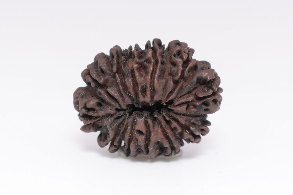 Twenty One Mukhi Nepali Natural Rudraksha