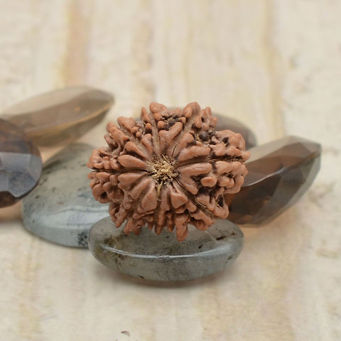 Original Best Quality  Certified Nine Mukhi Rudraksha