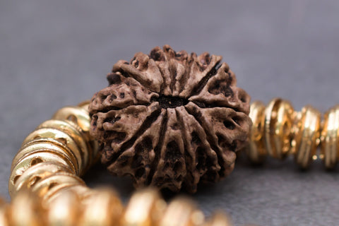 Image of Original 11 Mukhi Certified Rudraksha