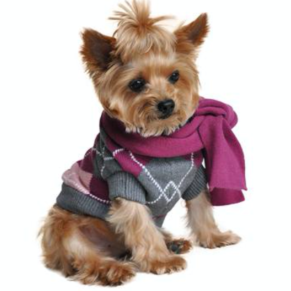 Purple Argyle Dog Sweater with Matching Scarf
