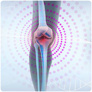 Improves the Health of Joints & Bones