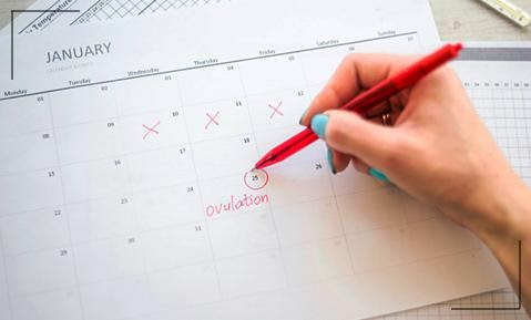 Maintain a Stable Ovulation Cycle