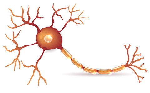Reduces Risk of Multiple Sclerosis and other Autoimmune Diseases