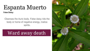 False Daisy (Espanta Muerto): 1oz Santo Products