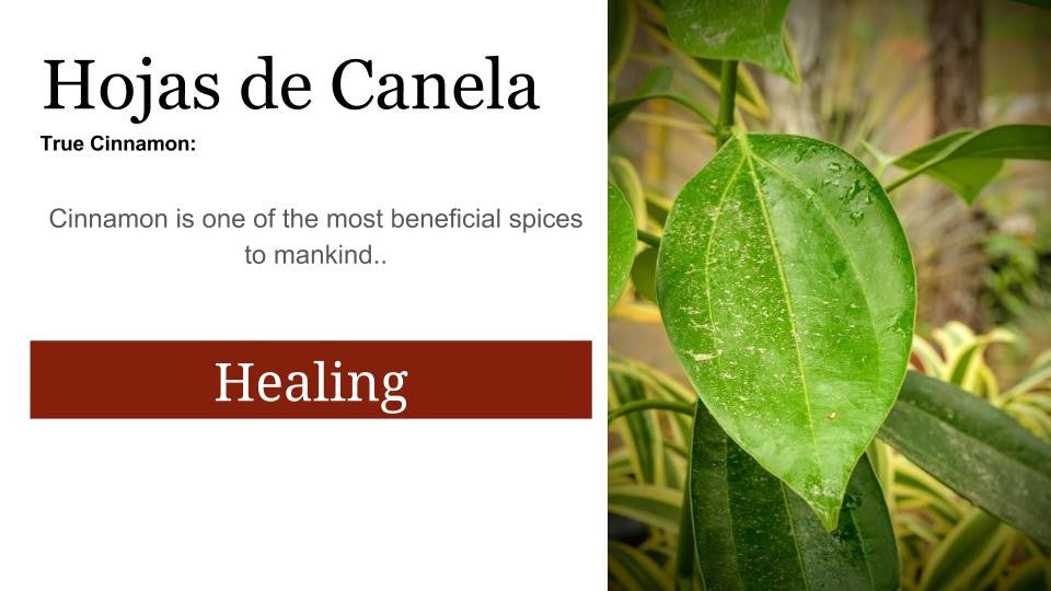 Cinnamon  Canela fresca: Santo Products
