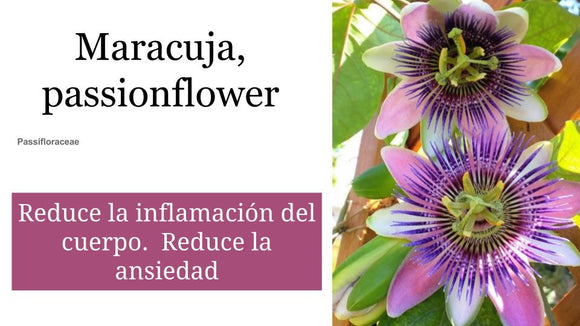 Maracuja, passionflower