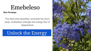 Embeleso Blue Plumbago  Embeleso: Santo Products 2 oz
