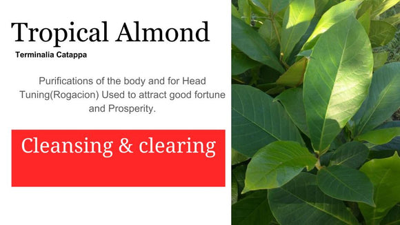 Almond-Almendra topical: 2 oz Santo Products