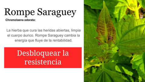 Rompe Saraguey 2 oz: Santo Products