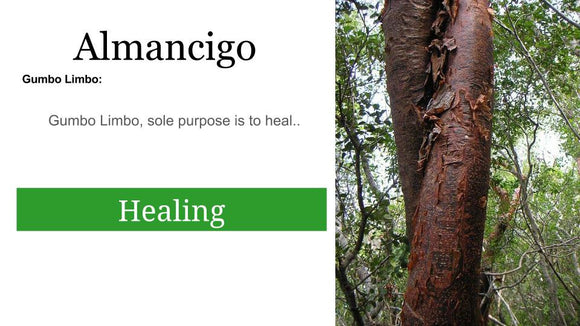 Palo Almacigo (Gumbo Limbo Tree): 2 oz Santo Products