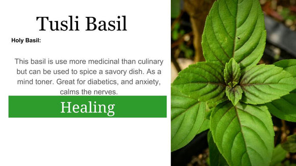 Tulsi basil Holy Basil: 2 oz Santo Products