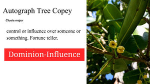 Autograph Tree  Copey: 2 oz Santo Products