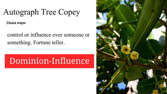 Autograph Tree  Copey: Santo Products