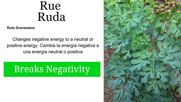 Ruda Fresca [Rue herb: 2 oz Santo Products