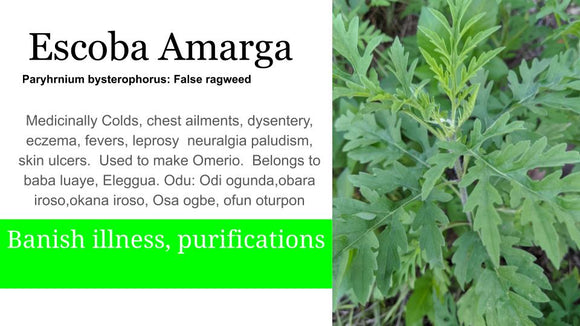 Escoba Amarga False ragweed: Santo Products