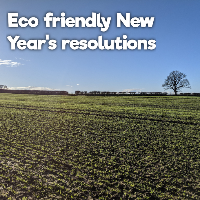 10 eco-friendly New Year's resolutions for 2021