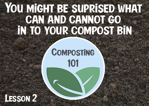 Composting 101: what to put in your compost bin (and what to avoid)