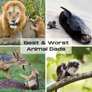 The Best & The Worst Animal Dads