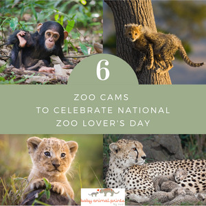 6 Zoo Cams for National Zoo Lover's Day