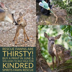 Prints for Conservation - Fawn Rescue