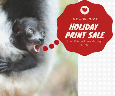 Baby Animal Prints Sale!