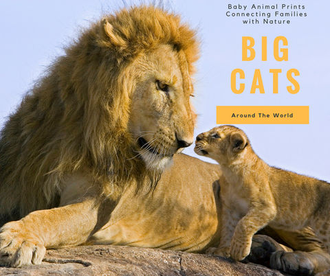 Big Cats from Around the World