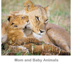 Mom and Baby Animals