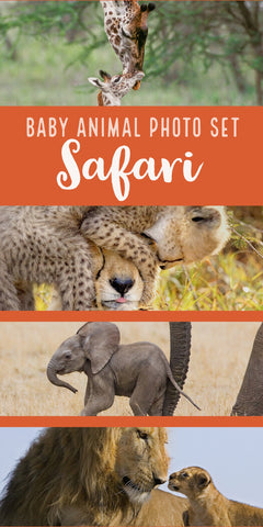 Baby Animal Prints - Safari Baby Animals - a perfect gift for a safari themed baby shower