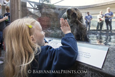 Girl with a sea otter