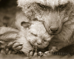 mom and baby bat fox photo sepia