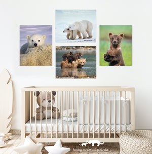 Baby Bears Photo Set (Color)