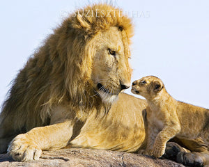 Baby lion cub with dad