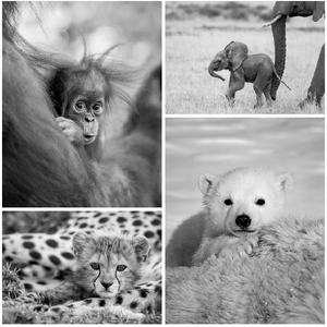 Cute Baby Animals Print Set in Black and White
