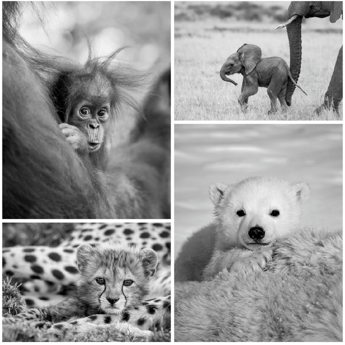 Cute Baby Animal Photo Set (Black and White)
