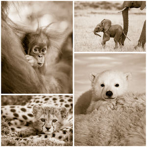 Cute Baby Animals Print Set in Sepia