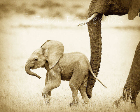 mom pushing baby elephant with trunk in sepia
