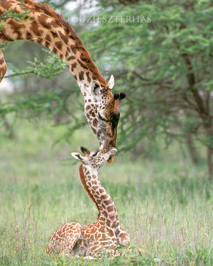 photo of giraffe mother and baby