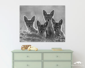 Jackal Pups Photo
