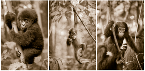 Jungle Baby Animals Print Set Sepia