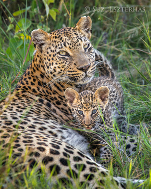 Leopard Mother and Cub Photo