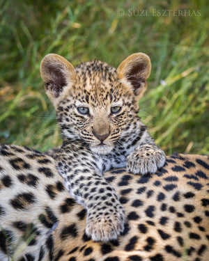 Cute Baby Leopard Photo