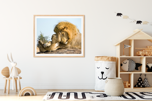 Baby Lion and Dad Playing Photo
