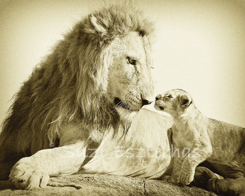 lion dad with cub in sepia